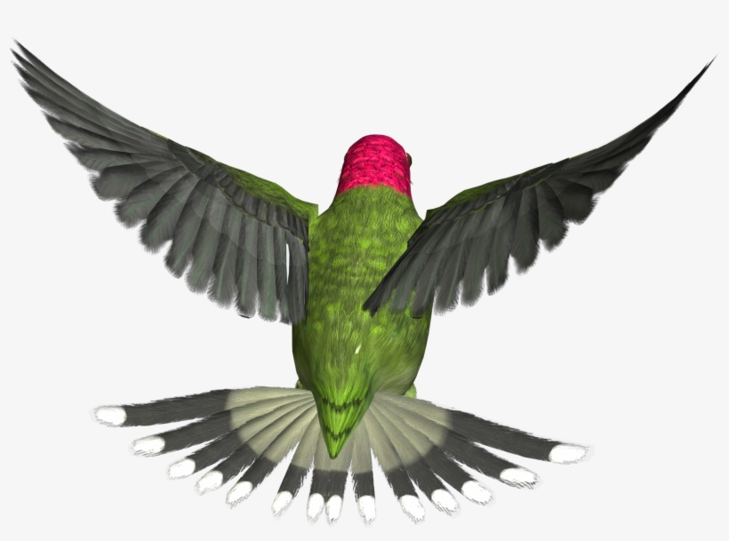 Bird Png - Flying Birds Gif Png - Free Transparent PNG Download - PNGkey