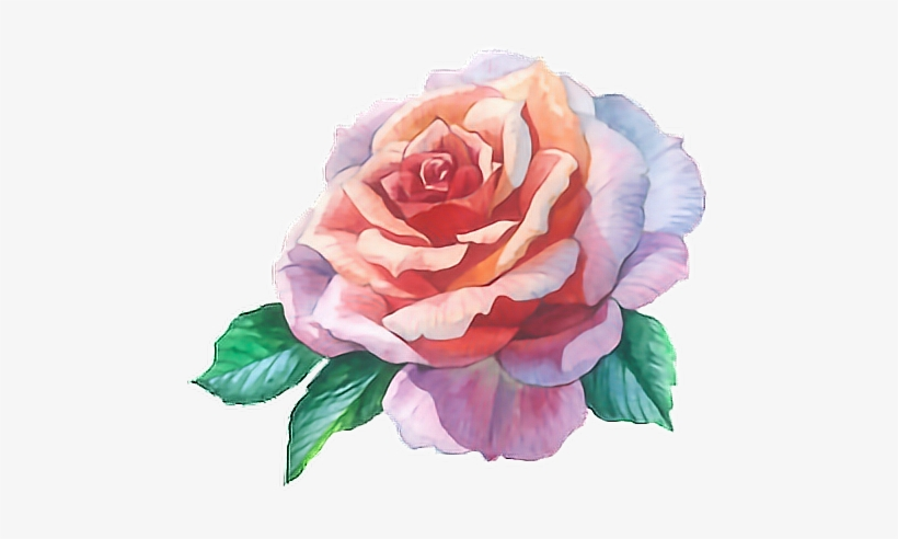 Rose Roses Flowers Watercolour Paint Watercolor Flower Rose Flower