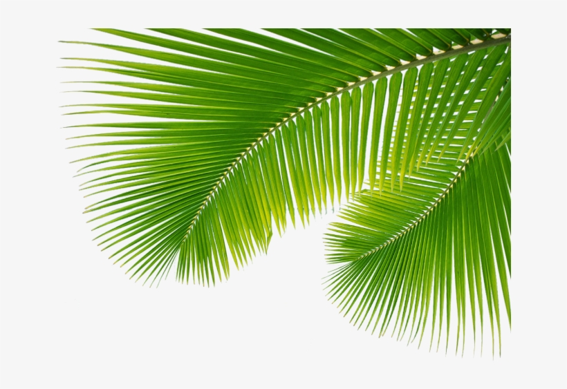 Free Icons Png - Palm Leaves Png, transparent png #66530