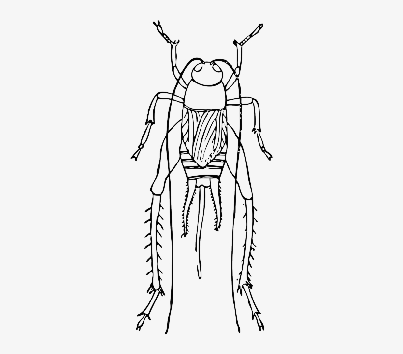 Cartoon, Bugs, Bug, Cricket, Insect, Crickets, Long - Cricket Outline, transparent png #601728