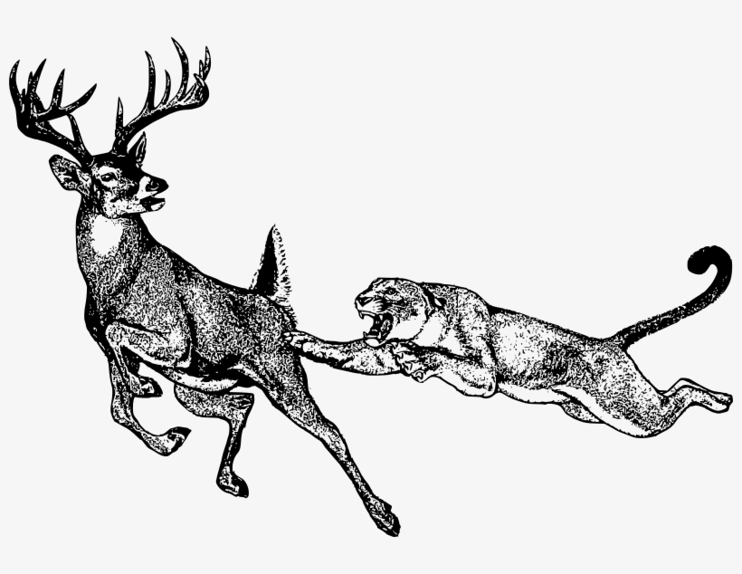 Mountain Lion Clipart Black And White - Lion Hunting Deer Drawing, transparent png #601886