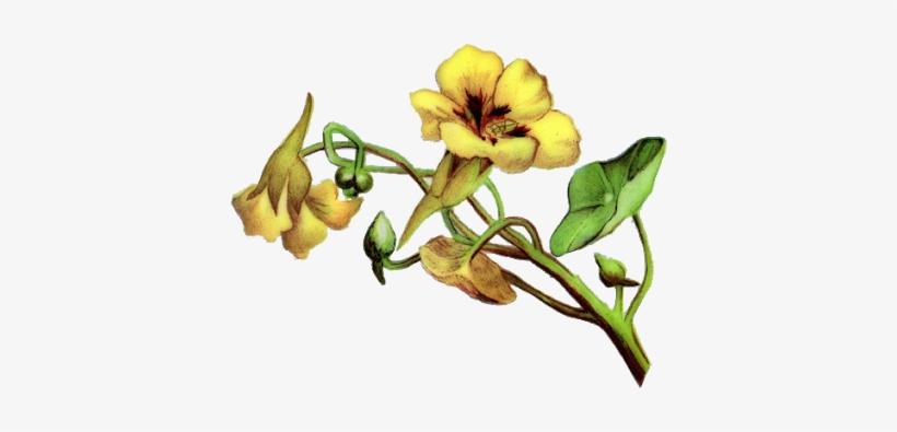 Vintage Flower Border Png Vintage Flowersimagem Png Yellow Bell
