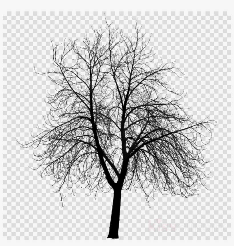 Creepy Tree Silhouette Png, transparent png #6081715