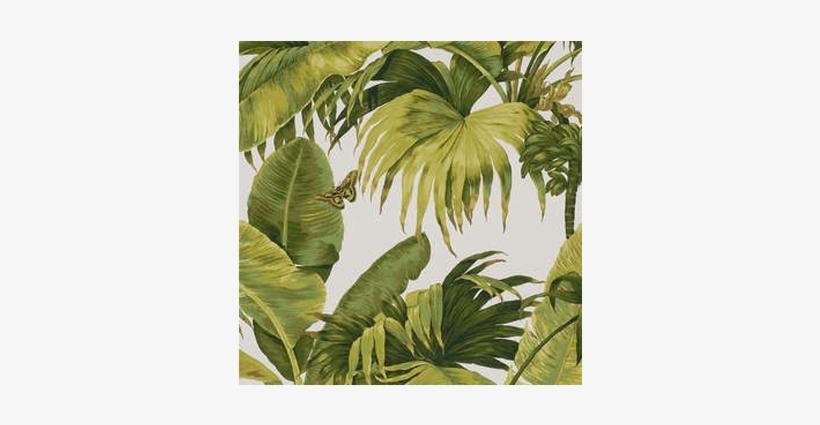 Download Pierre Frey Wallpaper Banana Tree Pierre Frey Bananier