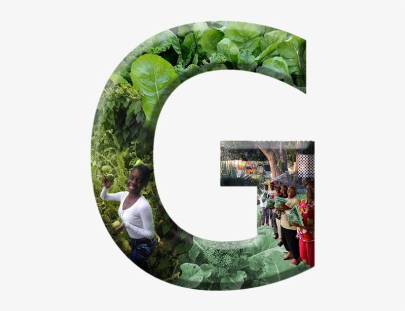 Crooms Academy Museum 1215 Historic Goldsboro Blvd - Botanical Garden, transparent png #613975