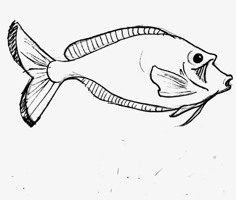 Clip Art Realistic Banner Royalty Free - Parrot Fish Line Art, transparent png #6282221