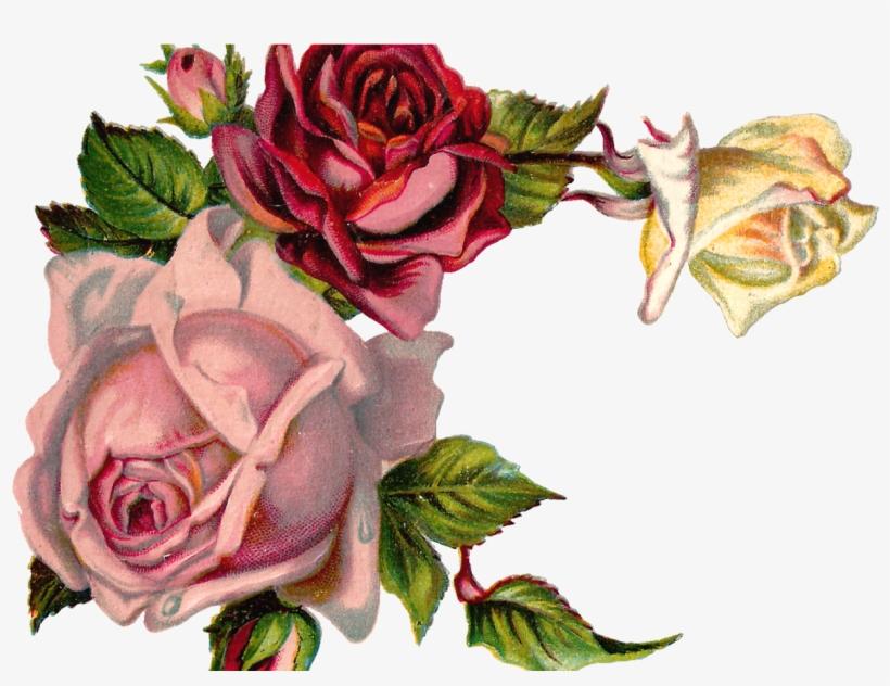 Free Digital Flower Pink Rose Corner Design Vintage Rose Corner
