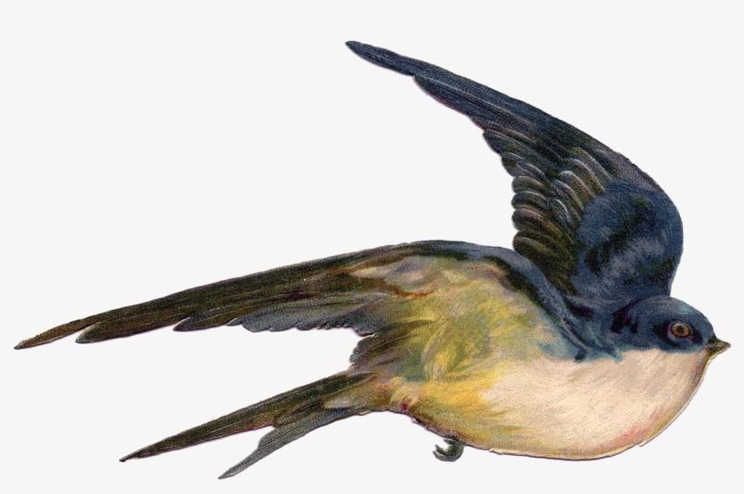 Fairy Bird Png Photo - Vintage Birds Public Domain - Free