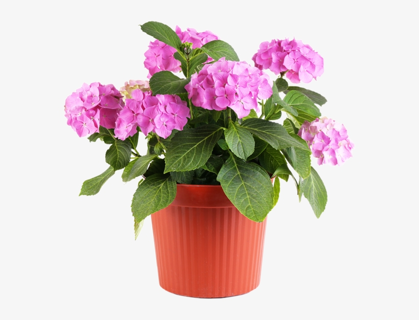 Feel Good About Visiting The Same Nursery Where The - Flower In Pot Png, transparent png #646031