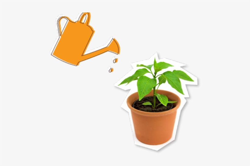 Potted Plants Free On Dumielauxepices Net - Watering Potted Plant, transparent png #646829