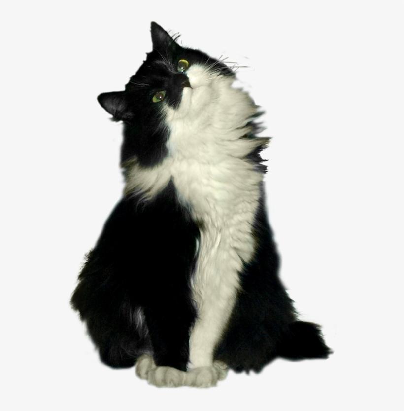 Cat, transparent png #6401597