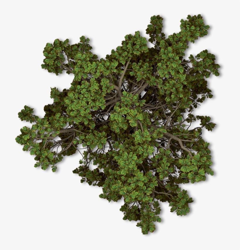 Free Tree Plan Png - Arboles En Planta Png, transparent png #653100