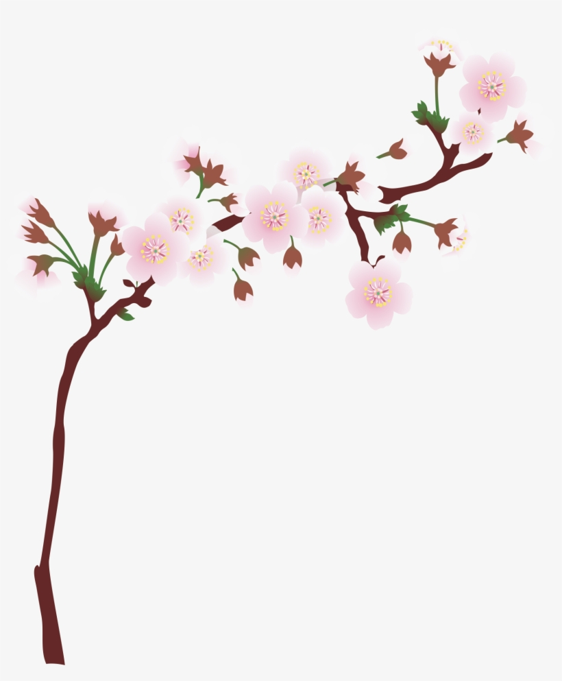 Graphic Library Download Branch Transparent Spring - Cherry Tree Branch Png, transparent png #653478