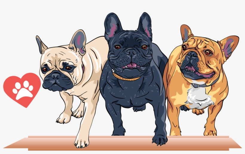 French Bulldog T - Too Hard To Look Back And You Re Too Afraid To Look, transparent png #655435