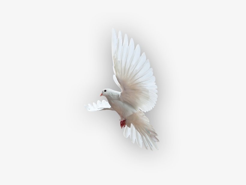 Holy Spirit Dove Png, transparent png #660008