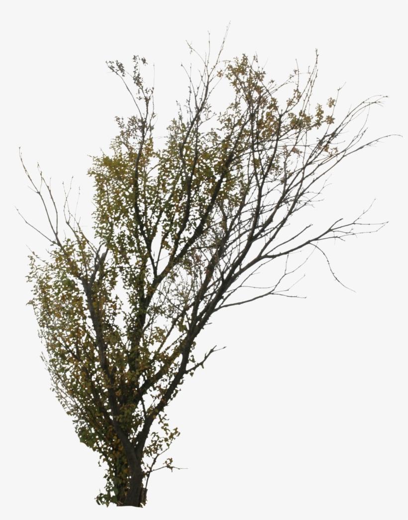 2d Trees, Autumn - Transparent Png Birch Trees, transparent png #666237