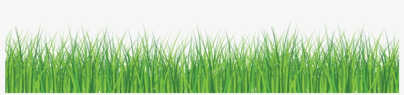 Grass Front - Green Grass White Background, transparent png #666359