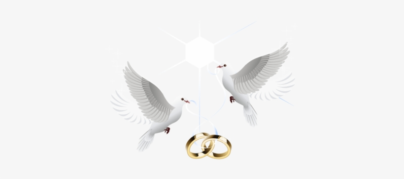 Love Birds Png Images - Wedding Doves With Rings Png, transparent png #668282