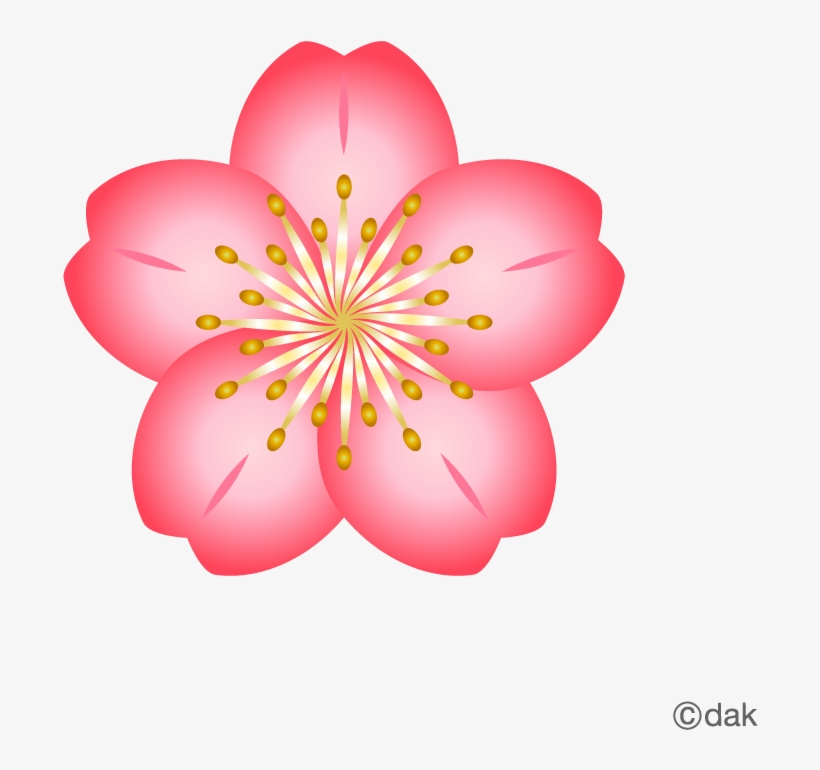 Cherry Blossom Flower Clipart, transparent png #675251