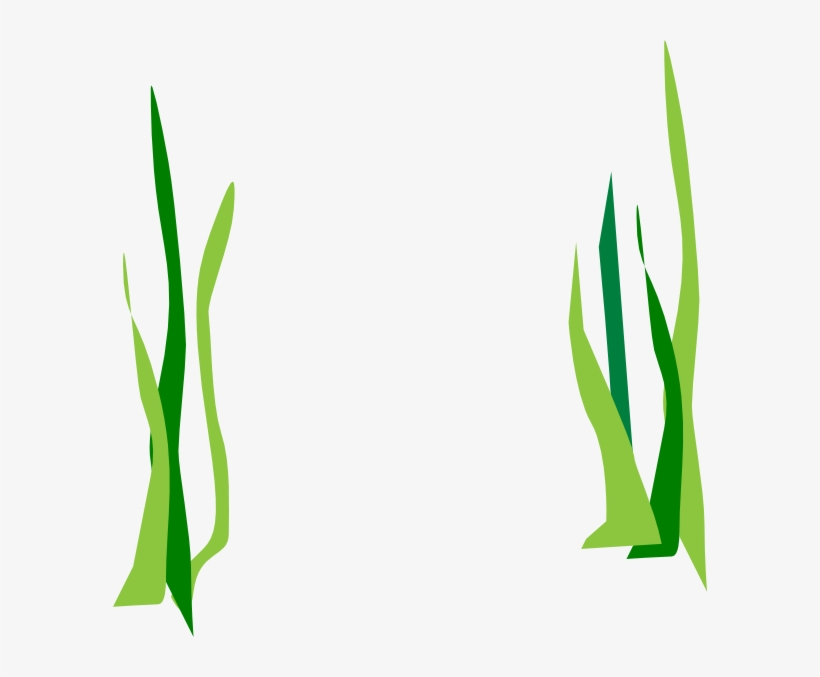 Green Reeds Clip Art At Clker Transparent Background Seaweed Clipart Free Transparent Png Download Pngkey