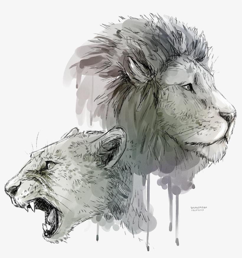 Lioness Roar Transparent Background - Lion And Lioness Drawing, transparent png #683768