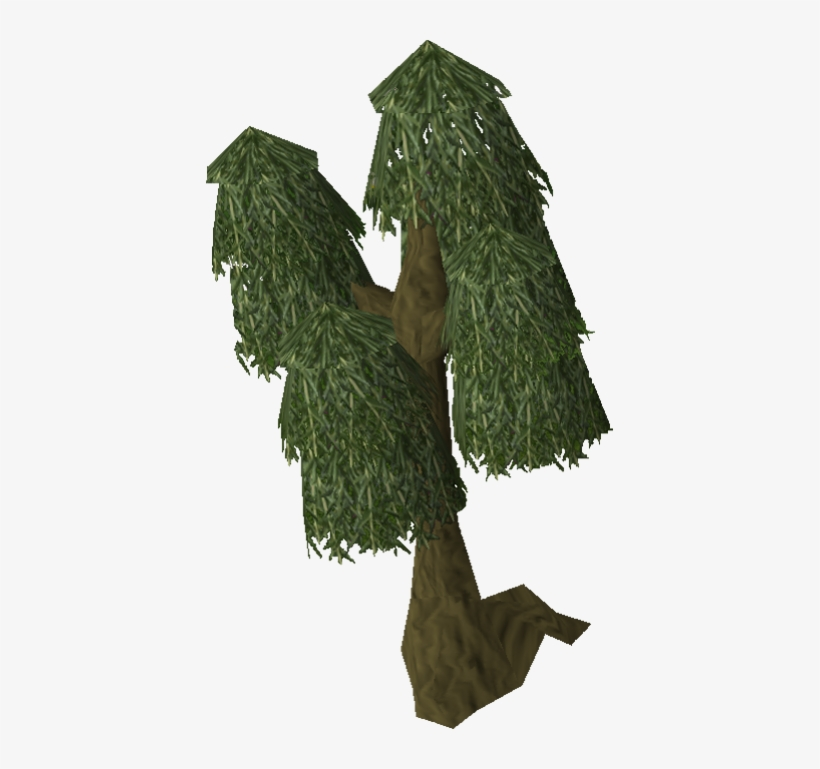 Image Willow Tree Old Png Runescape Wiki Fandom Powered - Runescape Willow Tree, transparent png #690572