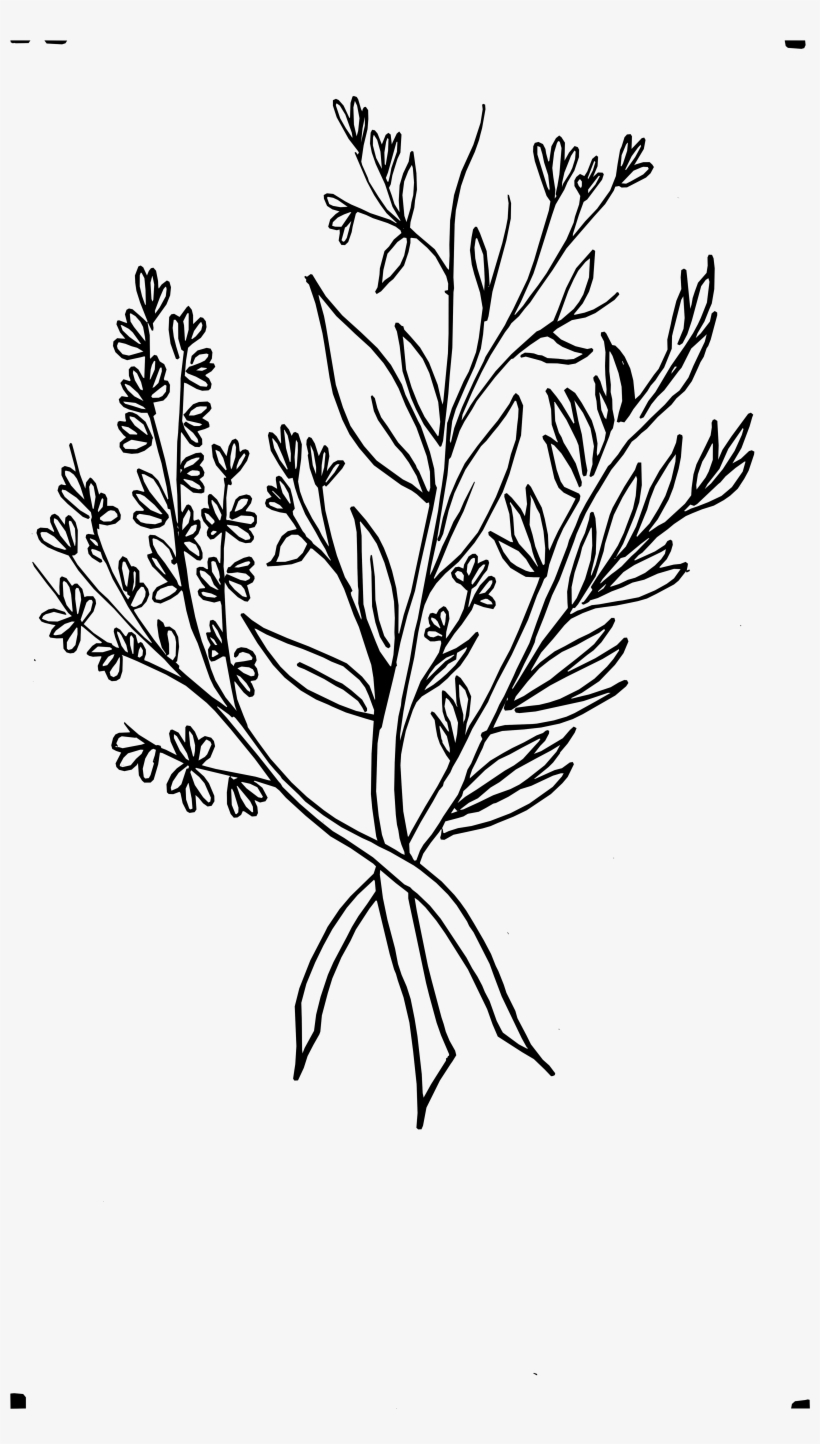 Beautiful Flowers 2019 » Wild Flower Drawing - Wild Flowers Png Drawing, transparent png #693398