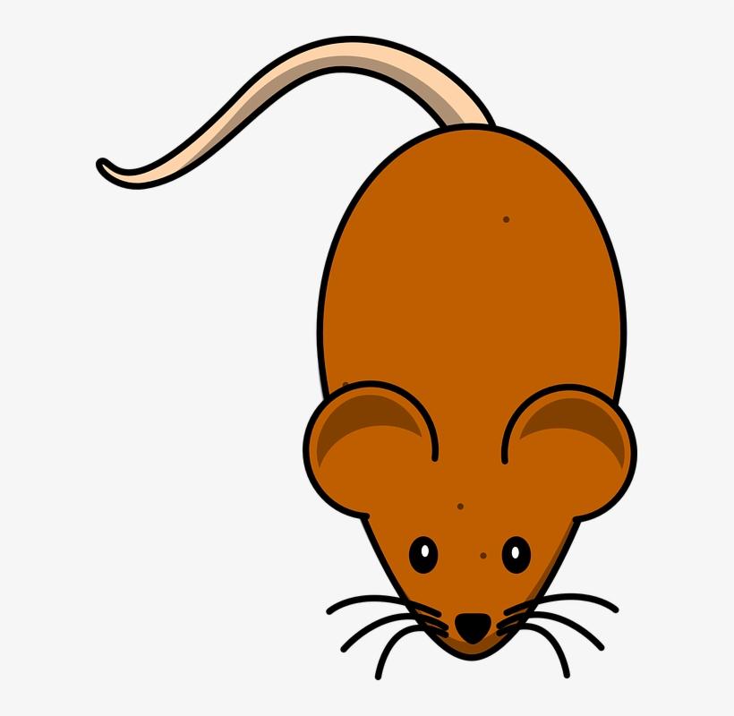 Mice Mouse Brown Clipart Mouse Pet Mouse Cartoon Mouse