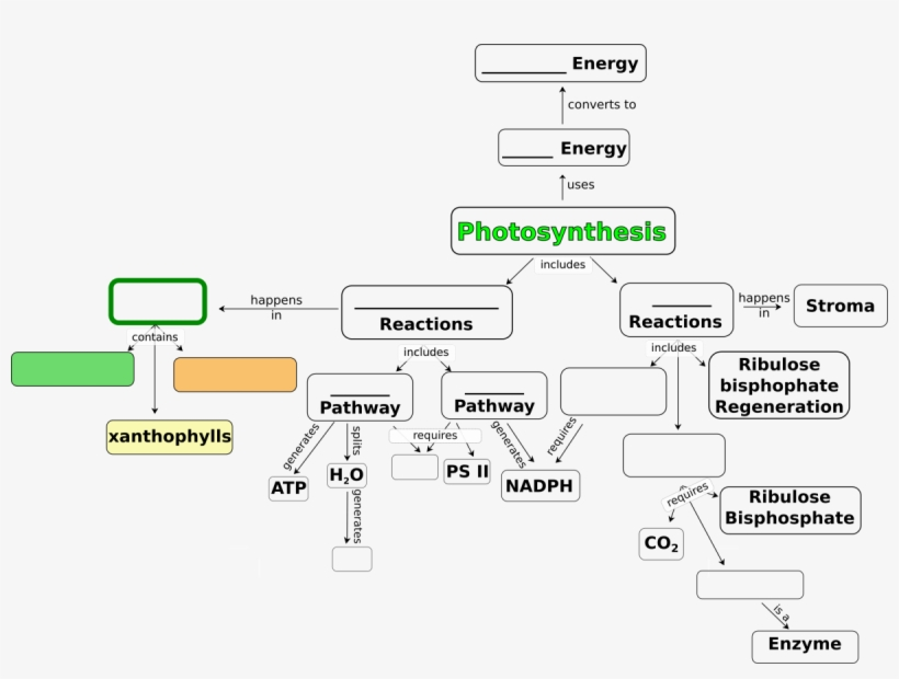Concept Map For Photosynthesis Free Transparent Png Download