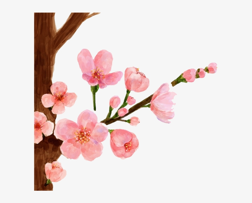 Cherry Painting Spring Peach - Peach Blossom Flower Drawing, transparent png #71609