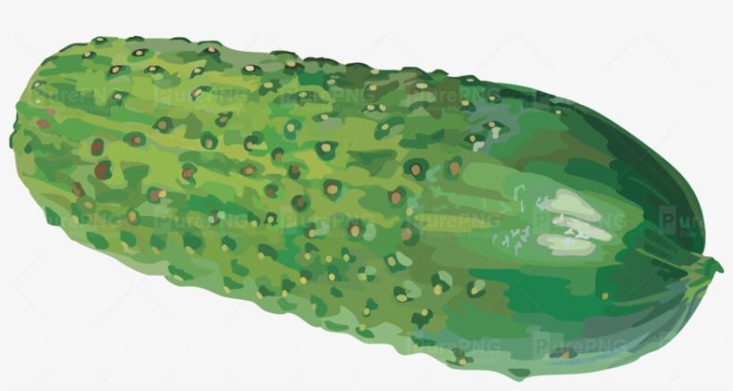 Cucumber Png Image - Watercolor Cucumber Png, transparent png #702464