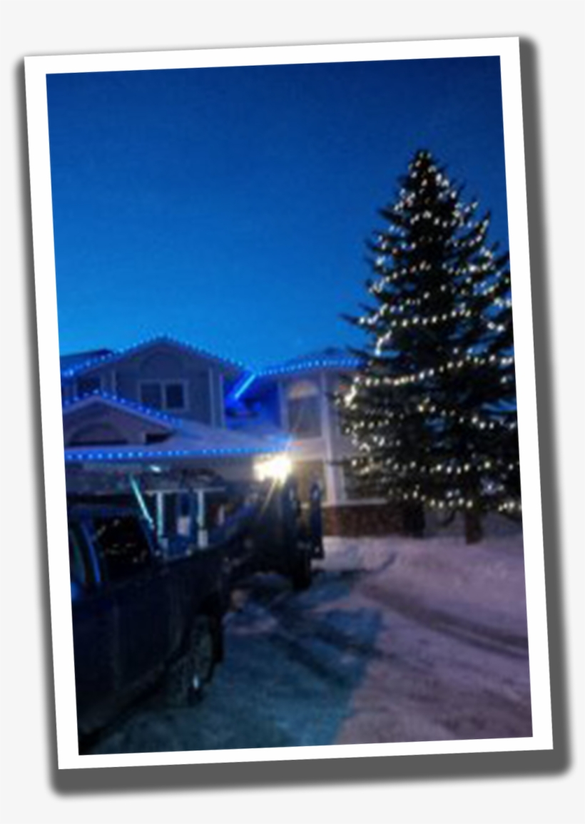 Light Up Your Trees - Christmas Tree, transparent png #710380