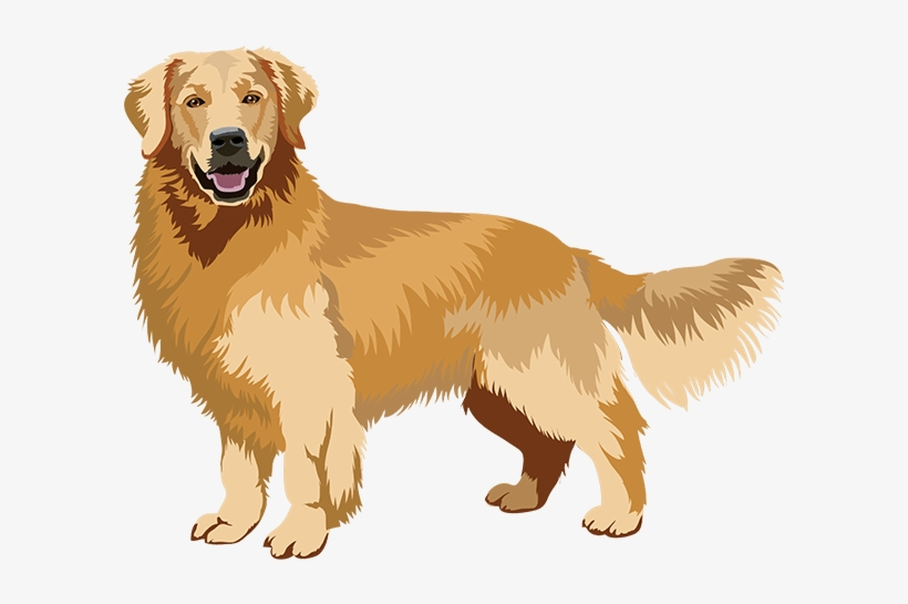 Realistic Dog Art Has Stickers - Golden Retriever Art Png, transparent png #712469
