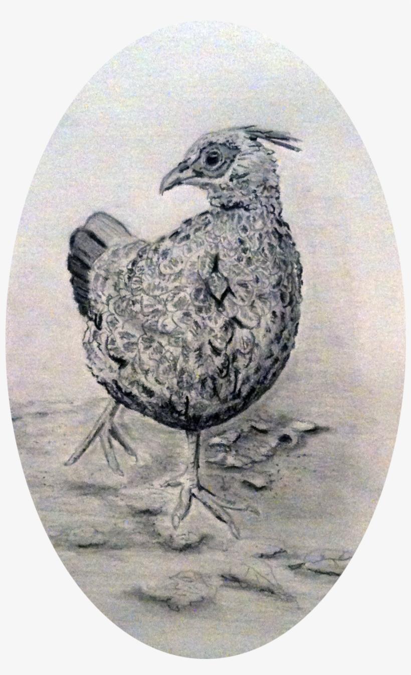 Pheasant pencil drawing transparent png 7108253