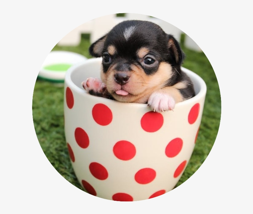 I Asked A Friend Who Owns A Couple Of Small Dogs What - Puppy Cute Dogs, transparent png #721527