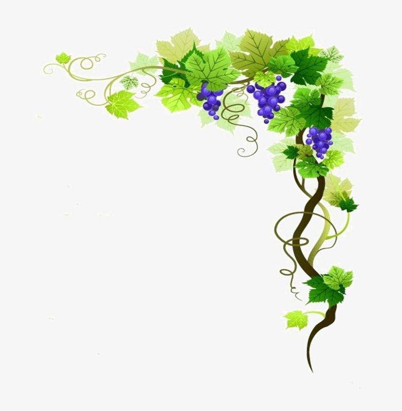 Grapevine Png Transparent Image - Grapes On Grape Vine Border, transparent png #724626