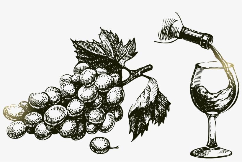 Png Grape Vine At Getdrawings Com Free For - Drawn Vine And Grape, transparent png #724887