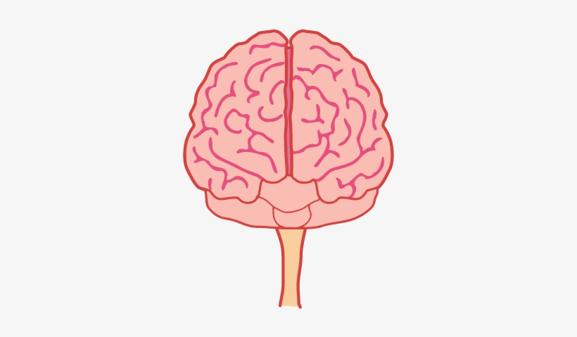 Brain front. Animated png view free