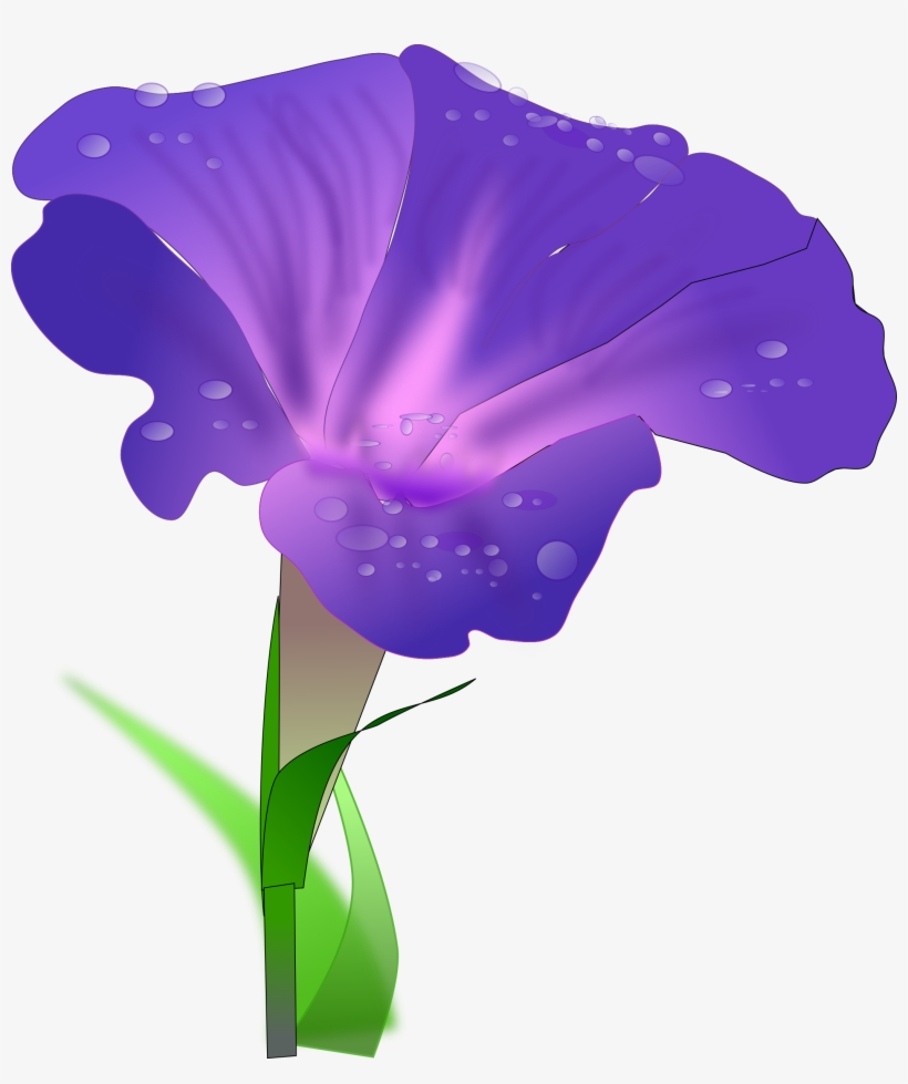 Japanese Morning Glory Drawing Flower Water Spinach - Morning Glory Png, transparent png #727172