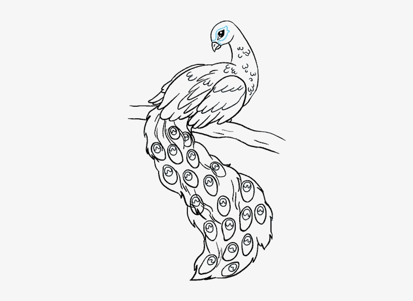 Bird Step By At Easy Drawing Of Peacock Free Transparent Png