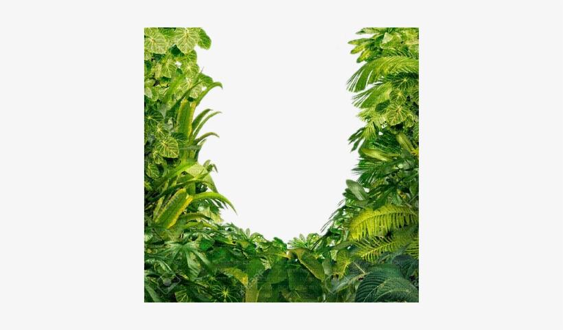 Jungle Leaves Png - Transparent Jungle Leaves - Free