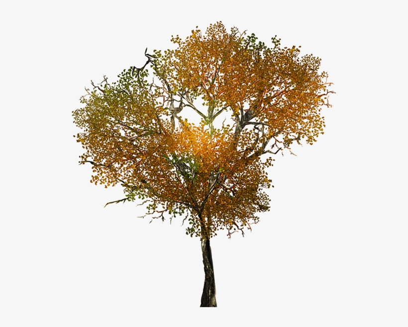 Texture For Large Leafy Branches For Tree Models - Fall Tree Png Textures, transparent png #731223