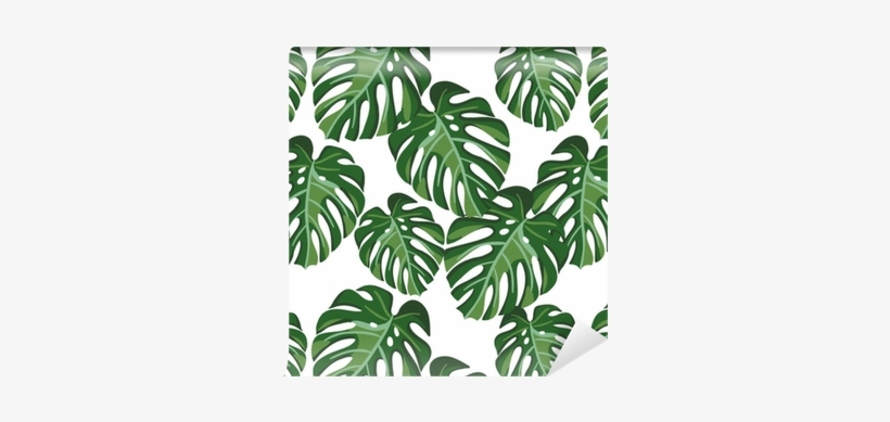 Monstera Palm Leaves On The White Background - Monstera Plant Background, transparent png #732210