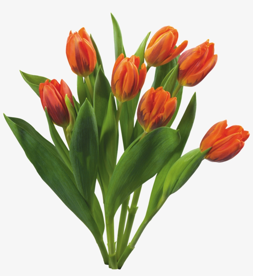 Bouquet Flowers Png - Love Tulips Beautiful Spring Flowers Set, transparent png #737198