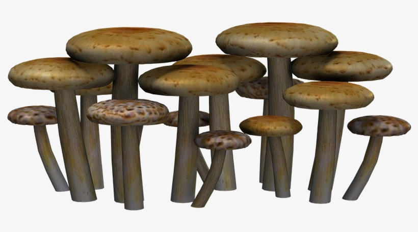 Transparent Png Mushroom Clipart Mushroom Colorful, transparent png #739396