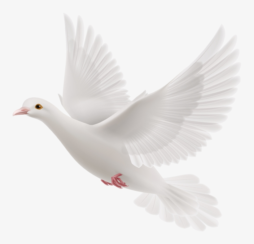 We Are Anointed By God And Led By His Holy Spirit To - White Dove Holy Spirit Png, transparent png #7593370