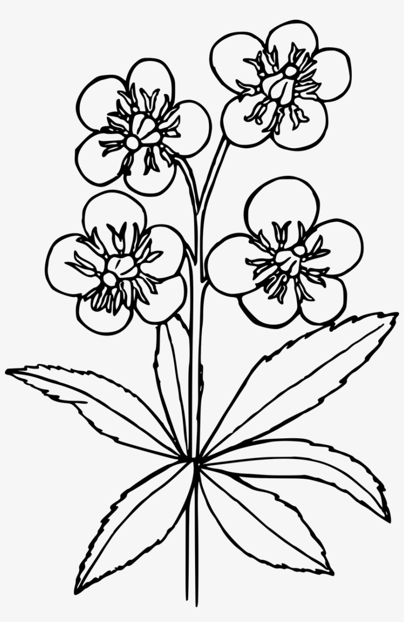 How To Draw A Wildflowers - Rose With Wild Flowers Drawing, transparent png #767462