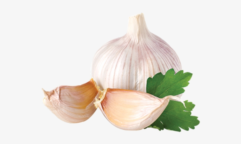 Garlic Png - Garlic Onion Png - Download PNG de alho transparente grátis - PNGkey