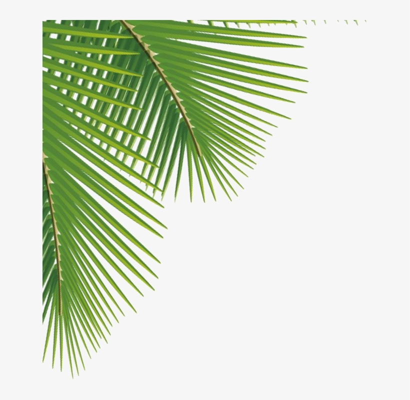 Green Palm Leaves Png Image - Palm Leaves Png, transparent png #7600877