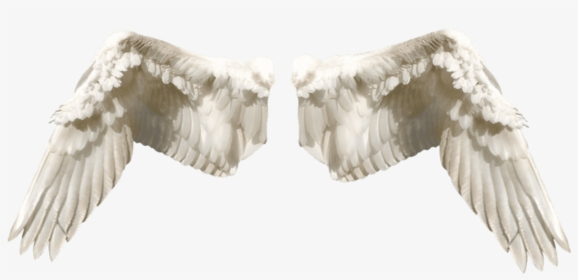 What Are The Different Types Of Angels In The Bible - Wings In Different Types, transparent png #7623016